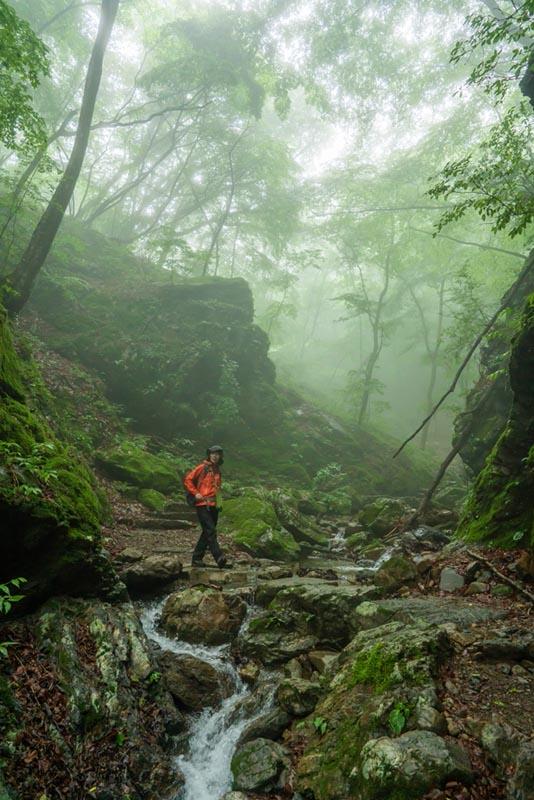 画像: 山登りで山に来たときは、キョロキョロしつつも、ちゃんと進んでいきます