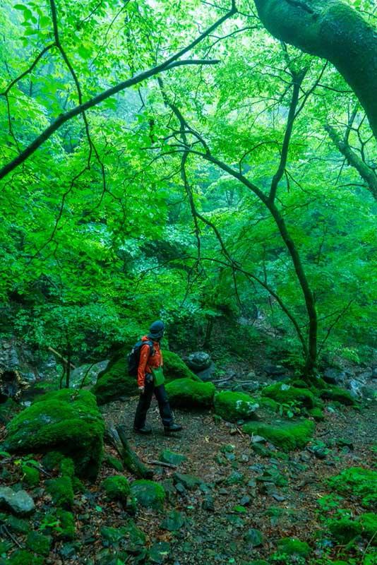 画像: 渓流沿いの道では岩という岩が苔むしており、頭上の木の葉の色とあいまって、空気までが緑色に染まって見えました