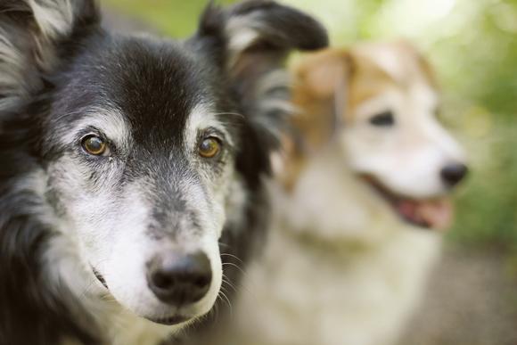 """画像: """"ペットショップに犬はいない"""" ポートランドの保護犬事情"""