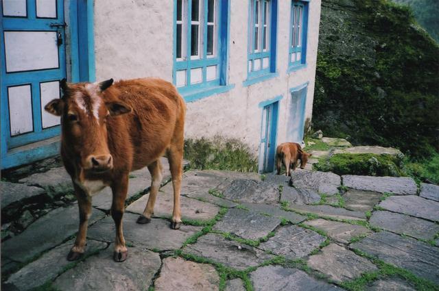 画像7: 村暮らし、まちあるき。 第17回 ネパール2004、旅の記憶をたどって|玉木美企子