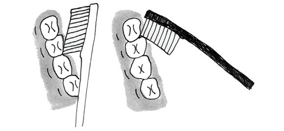 画像6: 歯ブラシを使う際のポイント