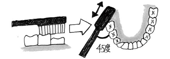 画像9: 歯ブラシを使う際のポイント