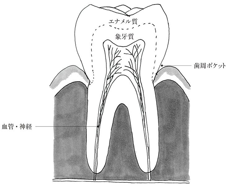 画像: まずは歯の状態をチェック