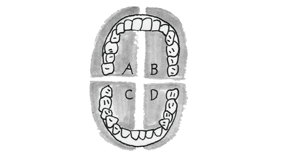 画像4: 電動歯ブラシを使う際のポイント