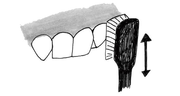 画像8: 歯ブラシを使う際のポイント