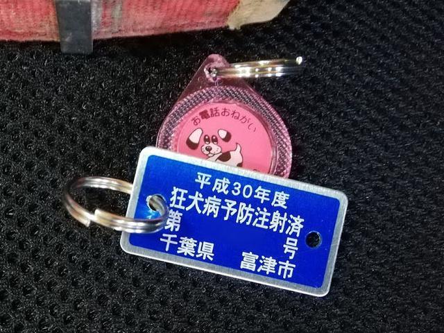 画像: 鑑札の番号を自治体に照らし合わせれば身元が判明するため、飼い主の元へ戻りやすい