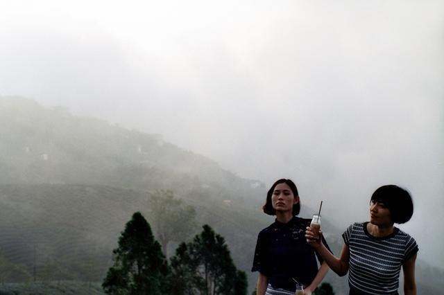 画像5: お茶のCM撮影のロケ地にもなった竹山の「八卦茶園(はっけちゃえん)」