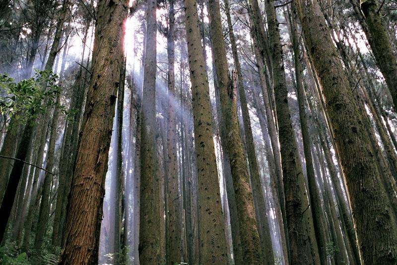 画像1: 「杉林溪(すぎばやしけい)」で、湖遊びと森林浴!