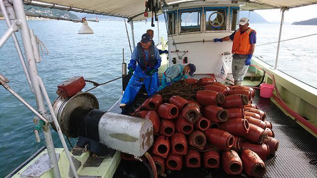 画像: 三原では海の深いところにタコつぼを仕掛けるため、大きいタコがかかりやすい。小さなタコがかかったときは、環境保護のため海に返す