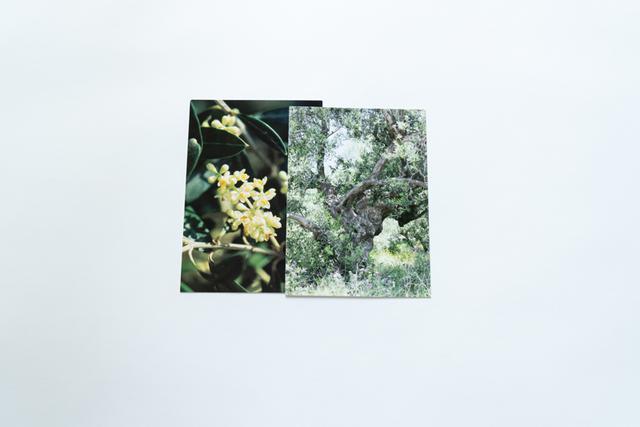 画像: 写真は、オリーブの花と木のフラワーカード。谷口さんのセッションでは、このカードリーディングによって、ピンときたフラワーエッセンスを選ぶプログラムも年に数回実施されています(スケジュールは随時谷口さん公式サイトにアップされます)