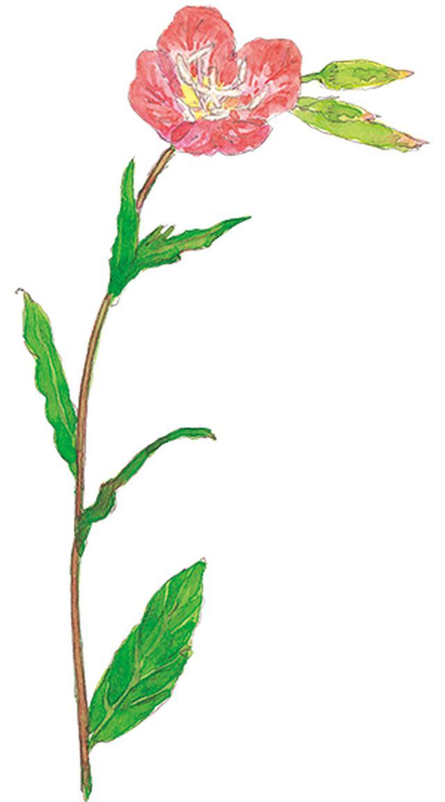 画像5: 楽しい「みちくさ」道端の植物図鑑|植物生態学者・多田多恵子さんと多摩川を歩く