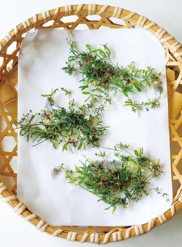 画像: ヤエムグラ、タンポポ、ムラサキカタバミの天ぷら。枝分かれしている草を選ぶと平たく揚がり、サクサクとした食感を楽しめる。ヨモギやカラスノエンドウでも