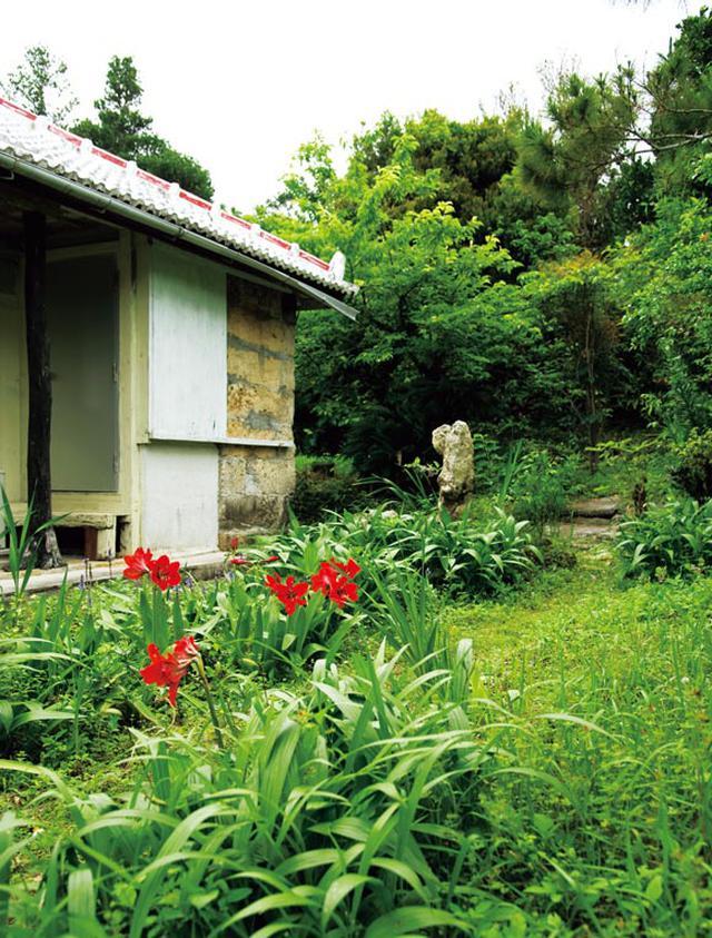 画像: 自宅は沖縄県の南部にある築50年の一軒家。庭には南国らしい植物が茂っている