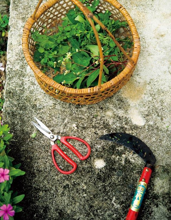 画像: 草摘みの三種の神器、かご・はさみ・クワ。草で料理をつくるときなどは大量に摘む必要があるので、使い慣れた道具が必須