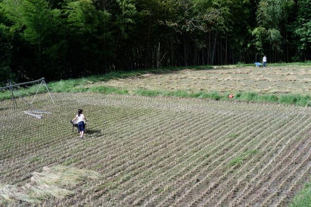 画像: 収穫した稲の束を、友人の子どもたちが運んでくれています