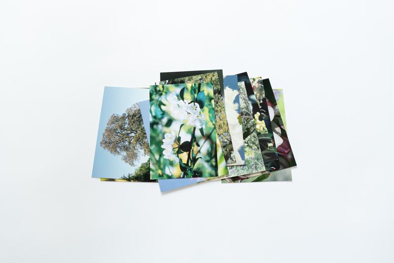画像: 写真は、38種類のバッチフラワーエッセンスの花のカード。カードの中から直観に従って引いたり、飲んでいるフラワーエッセンスの植物の姿を見たり、いろいろな活用ができます。 *フラワーエッセンスを取り扱うオンラインショップ等で購入可能です。