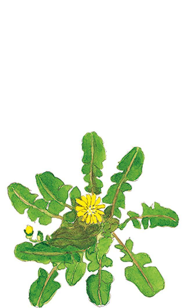 画像16: 楽しい「みちくさ」道端の植物図鑑|植物生態学者・多田多恵子さんと多摩川を歩く