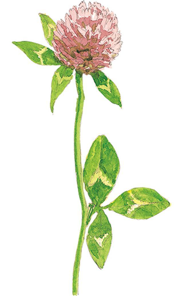 画像14: 楽しい「みちくさ」道端の植物図鑑|植物生態学者・多田多恵子さんと多摩川を歩く