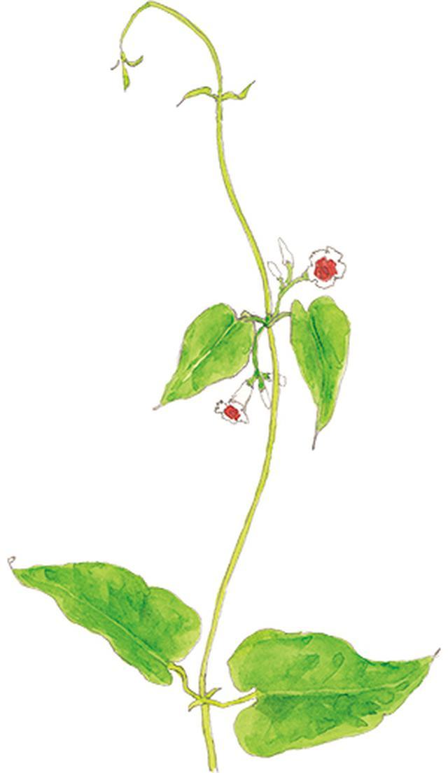 画像18: 楽しい「みちくさ」道端の植物図鑑|植物生態学者・多田多恵子さんと多摩川を歩く