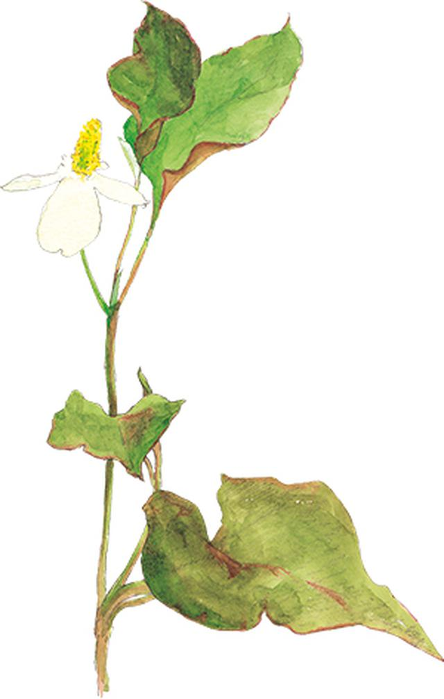 画像25: 楽しい「みちくさ」道端の植物図鑑|植物生態学者・多田多恵子さんと多摩川を歩く