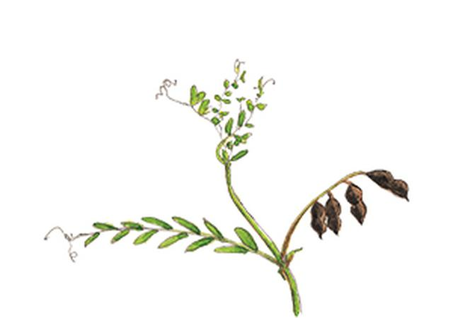 画像21: 楽しい「みちくさ」道端の植物図鑑|植物生態学者・多田多恵子さんと多摩川を歩く