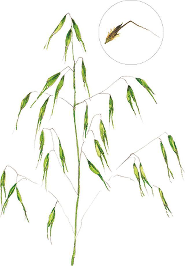 画像9: 楽しい「みちくさ」道端の植物図鑑|植物生態学者・多田多恵子さんと多摩川を歩く