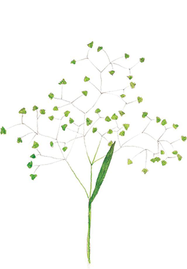 画像10: 楽しい「みちくさ」道端の植物図鑑|植物生態学者・多田多恵子さんと多摩川を歩く