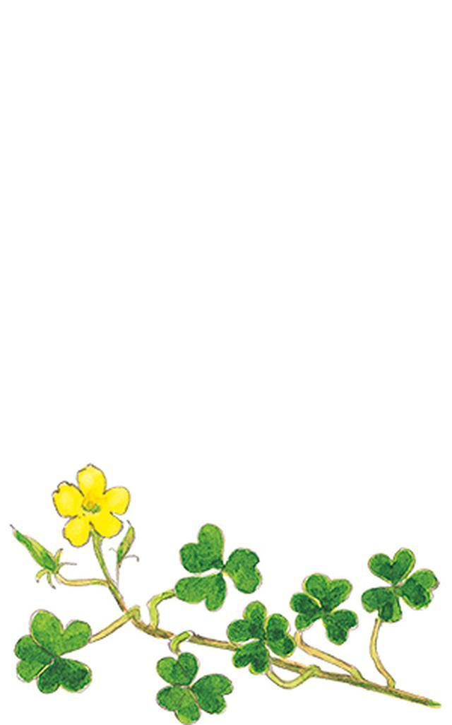 画像12: 楽しい「みちくさ」道端の植物図鑑|植物生態学者・多田多恵子さんと多摩川を歩く