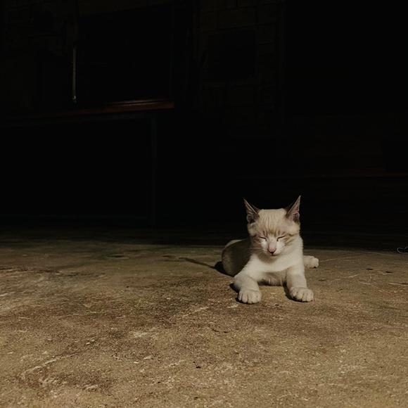 画像4: 「子猫」 根本きこ