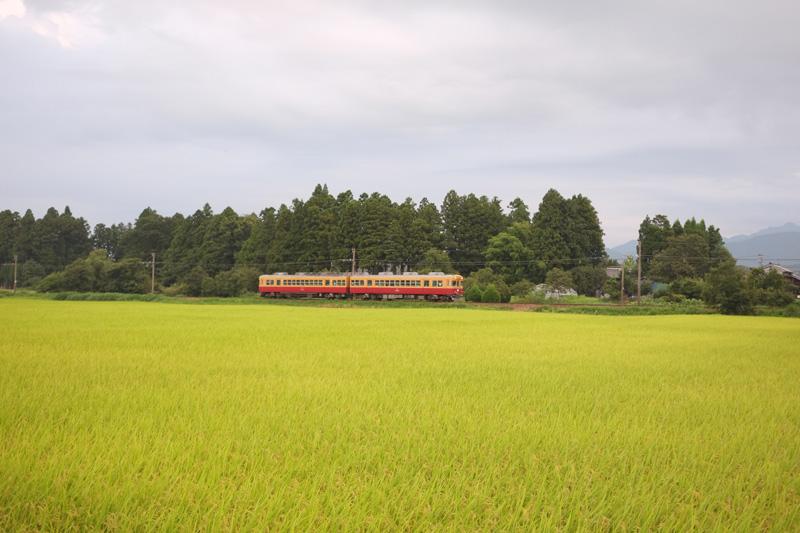 画像: 富山地方鉄道の沢中山駅近く。屋敷林の向こう側に巣巣があります