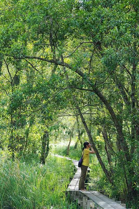 画像: 木道を外れて歩けないので、近寄れる木は限られます。ちょうどよい位置の幹はすかさずこけチェック!