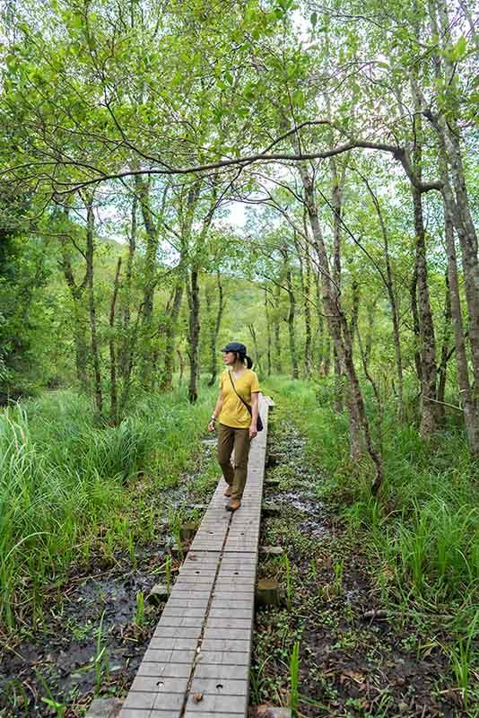 画像: 木立越しに透けて見える池や草原、山々の連なり。湿原の景色には、深い森とはまた違った魅力があります