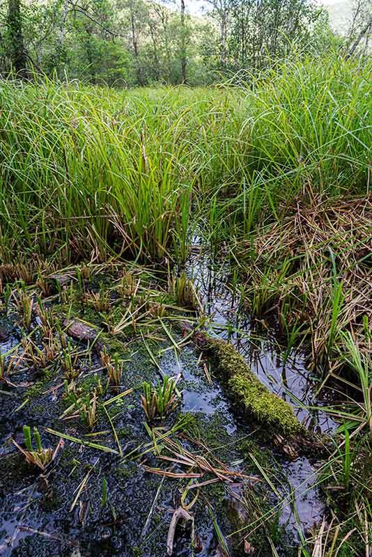 画像: 湿原の中でも場所によって環境が異なり、生えている植物も多様です