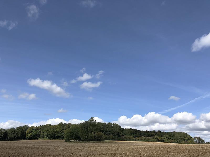 画像: ウィッチウッドの森の散歩で見た秋晴れの景色