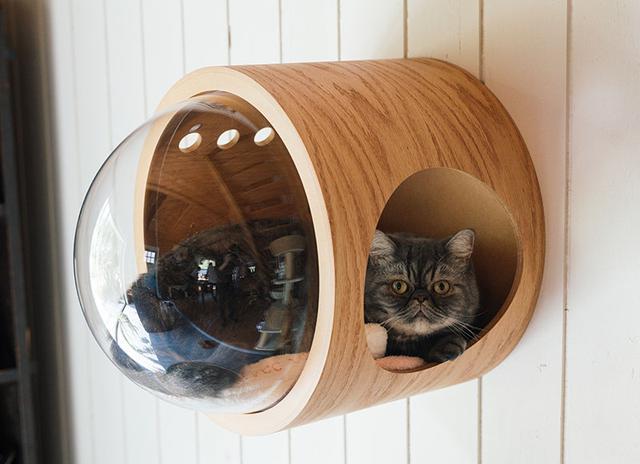 画像: エキゾチックショートヘアのイハくんは、玄関の壁に取り付けた隠れ家がお気に入り。賃貸マンションに住んでいたころは臆病でしたが、いまではすっかりのびのびと暮らしています