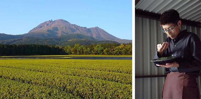 画像: 「まぼろしの島原茶」は、普賢岳のふもとでていねいにつくられている