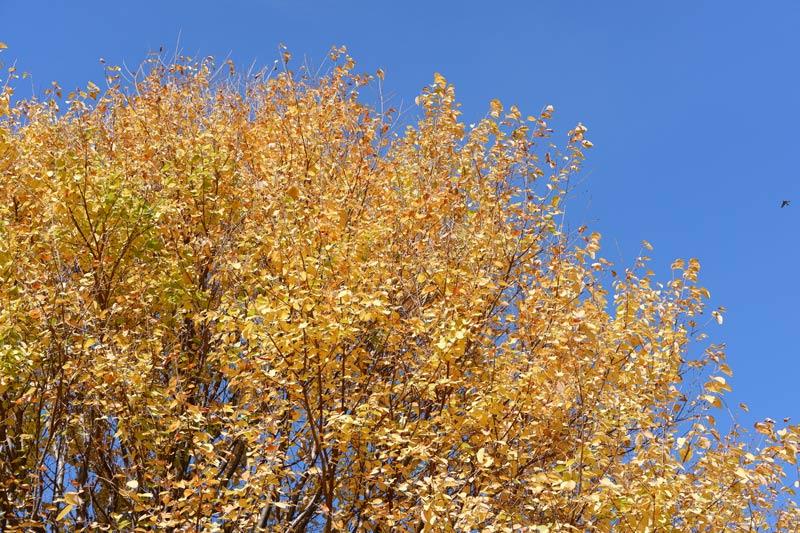 画像1: 秋晴れの空の下、 数家族が集って小麦の種まきを
