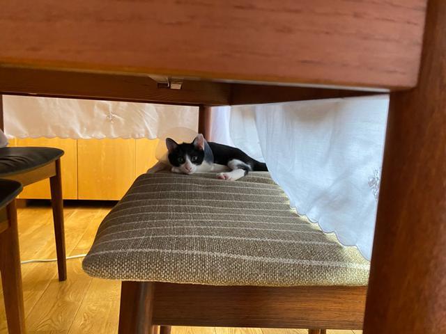 画像3: 小さい猫