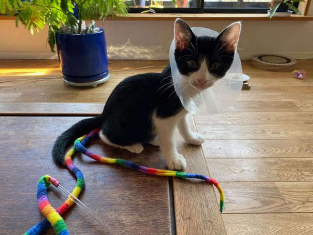 画像2: 小さい猫