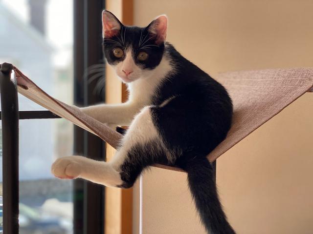 画像4: 小さい猫