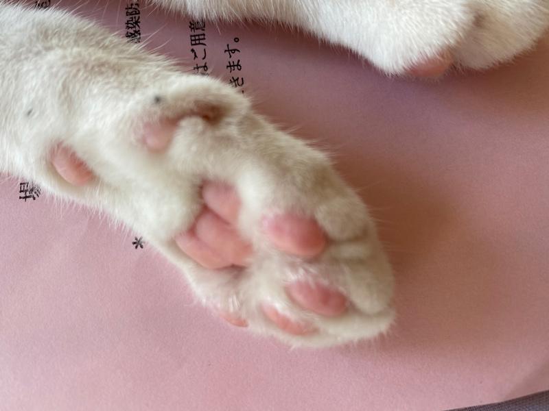 画像5: 小さい猫