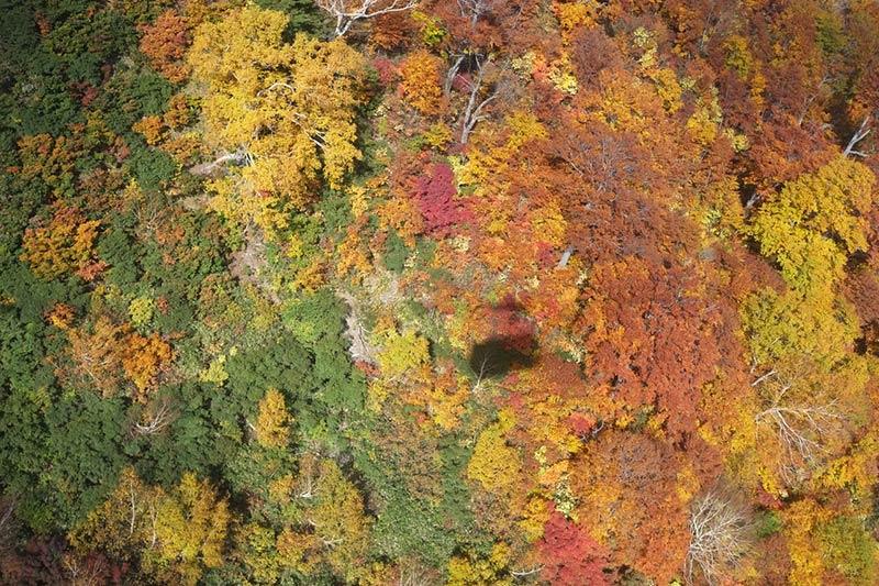 画像: ロープウエイからの眺め