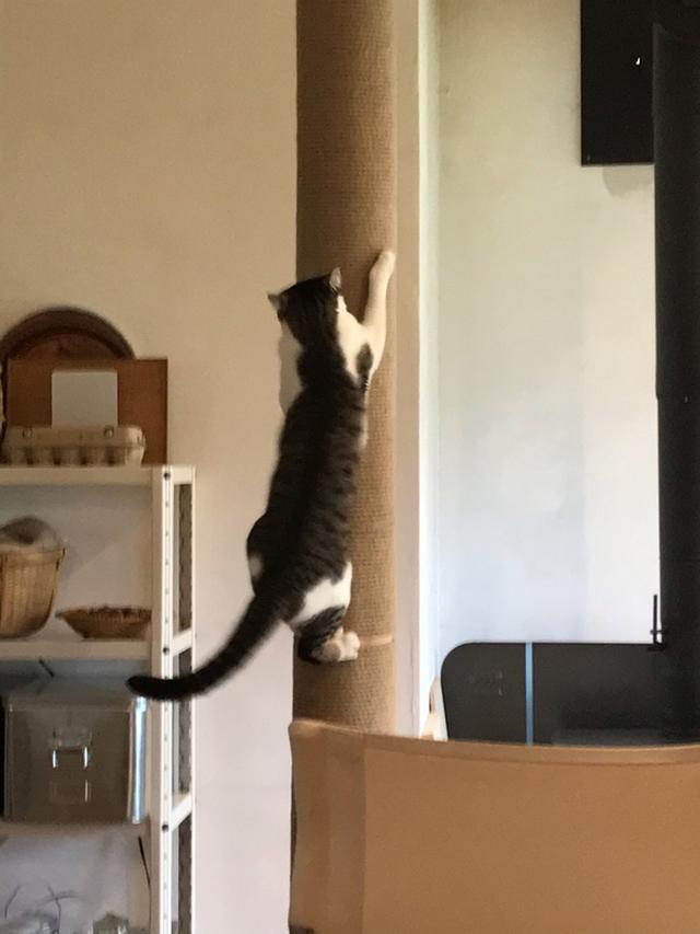画像: 柱の話を伺っていたら、聞いていたかのように、登って見せてくれたスイ。フレンドリーです