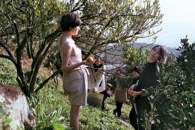 画像3: 甘~いみかん「桶柑(たんかん)」の畑へ、冬のフルーツ狩り