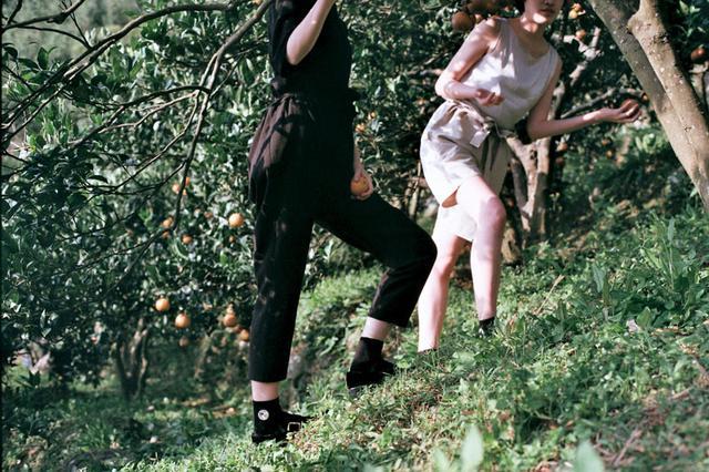 画像4: 甘~いみかん「桶柑(たんかん)」の畑へ、冬のフルーツ狩り