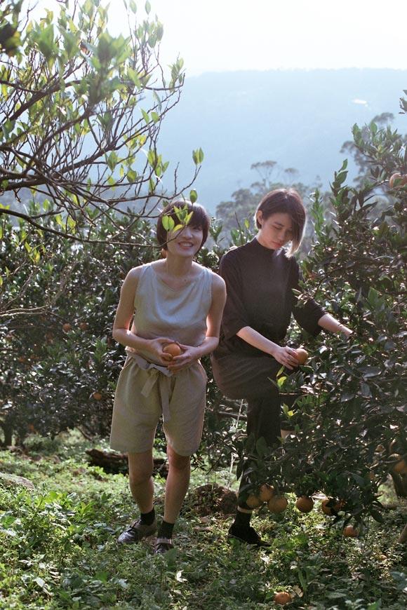 画像2: 甘~いみかん「桶柑(たんかん)」の畑へ、冬のフルーツ狩り