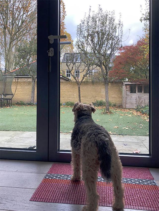 画像: ディーナさんのお宅のリビングから庭を眺める、愛犬のデイジー