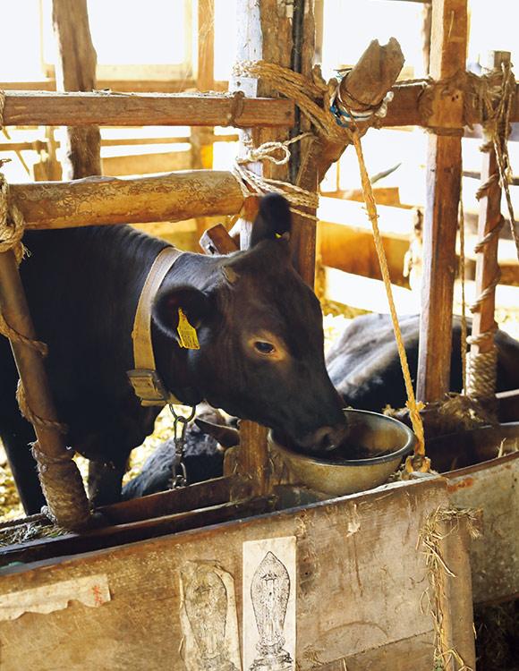 画像: 藁は飼っている繁殖牛の飼料や寝床にも使われる。毛艶がよく、大切に育てられているのが伝わる、愛らしい子牛たち
