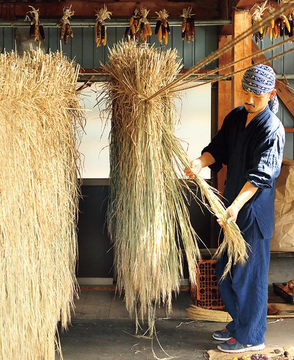 画像: 髙橋さんは藁細工用に古代米などを育て、色や太さ、長さが違う10種類の藁をつくっている。藁は、しっかり乾くまで1カ月くらい納屋で干す。天井から吊り下げているのは「虹色はぜきび」