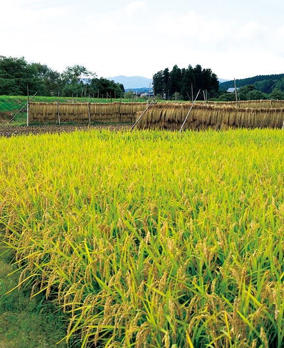 画像: 自宅から歩いて3分ほどの場所に広がる田んぼ。自家製の堆肥を使い、お米を育てている